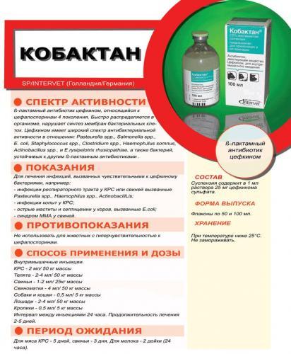 kobaktan-dlya-koshek-2.jpg