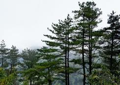 im244-320px-Pinus_taiwanensis_on_east-west_highway_Taiwan.jpg