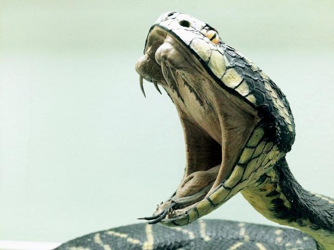 snake-1974382_960_720.jpg