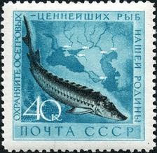 im224-490px-1959_CPA_2331.jpg