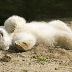медвежонок-белый-150x150.jpg