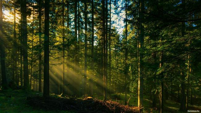 KHvojnye-lesa.jpg
