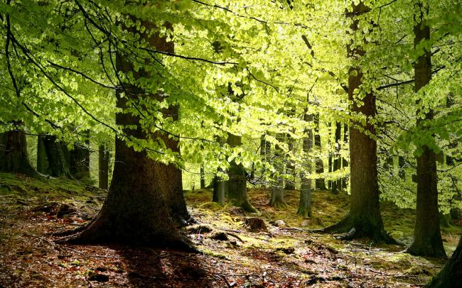 SHirokolistvennye-lesa.jpg