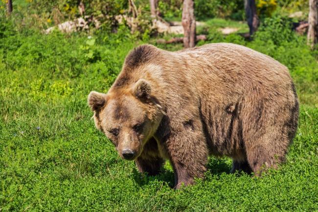 bear-422682_960_720.jpg