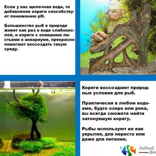 korjagi-dlja-akvariuma.jpg