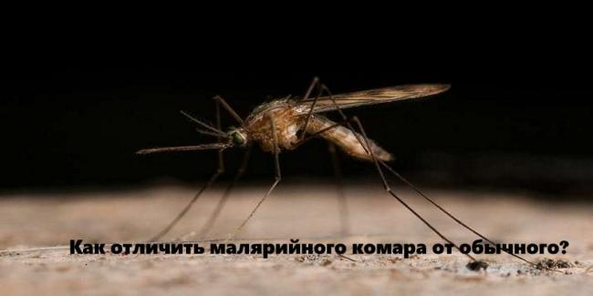 malyariinui_komar.jpg