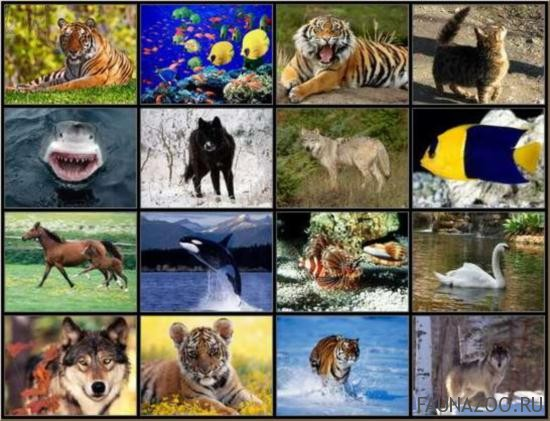 разнообразие-животных.jpg