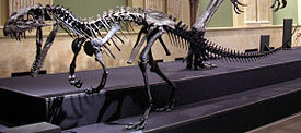 275px-Ceratosaurus_mounted.jpg