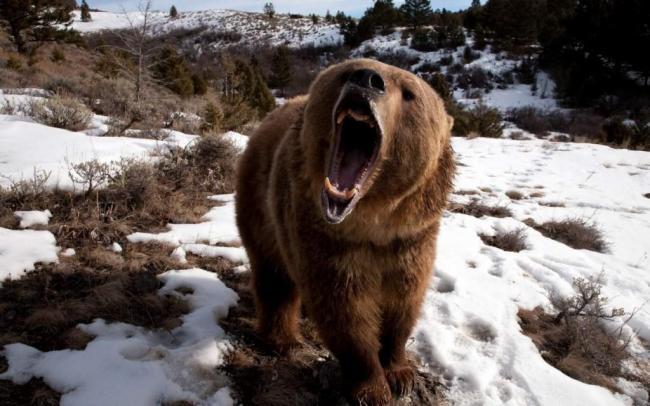 samye-silnye-cheljusti-zhivotnogo-mira-animal-reader.-ru-006-1024x640.jpg