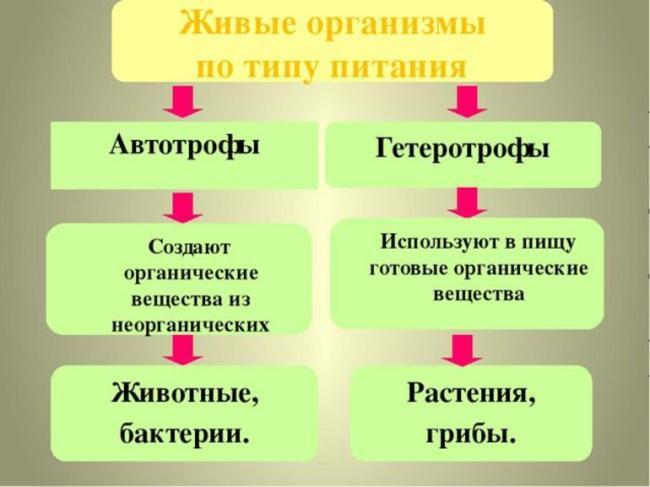 avtotrofy_geterotrofy_opredelenie.jpg