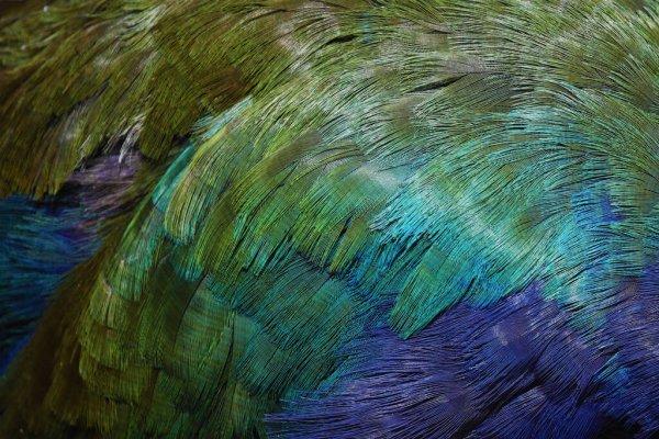 depositphotos_352832342-stock-photo-colorful-plumage-takahe-endemic-new.jpg