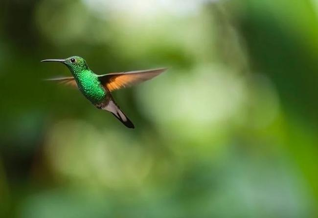 interesnie-fakti-o-kolibri.jpg