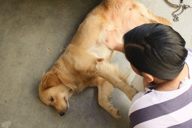 epilepsiya-u-sobak-prichiny-simptomy-sovety-veterinara_01.jpg