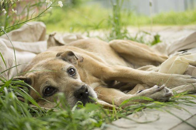 epilepsiya-u-sobak-prichiny-simptomy-sovety-veterinara_02.jpg