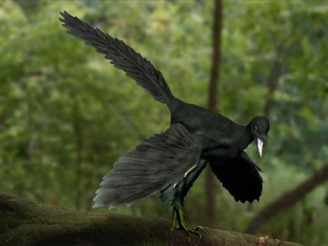 Archaeopteryx3.jpg