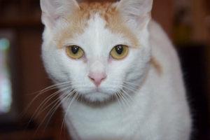 cat-13899-300x200.jpg
