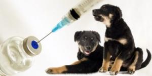 vakcinaciya_schenku_rotveylera_1_05144652-300x150.jpg