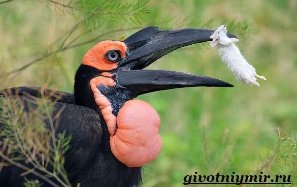 ptica-nosorog-obraz-zhizni-i-sreda-obitaniya-pticy-nosorog-5.jpeg
