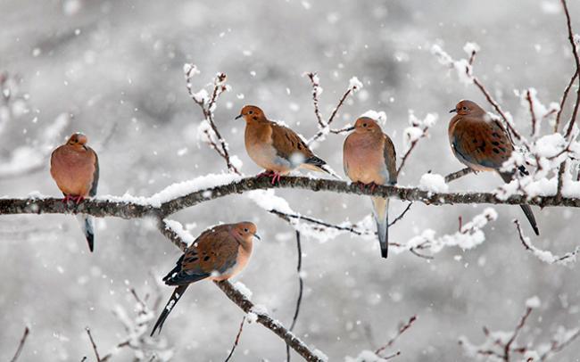 birds-winter.jpg