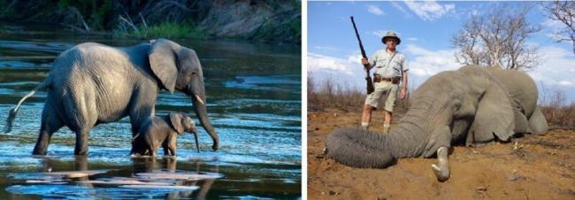 ohota-na-slonov.jpg