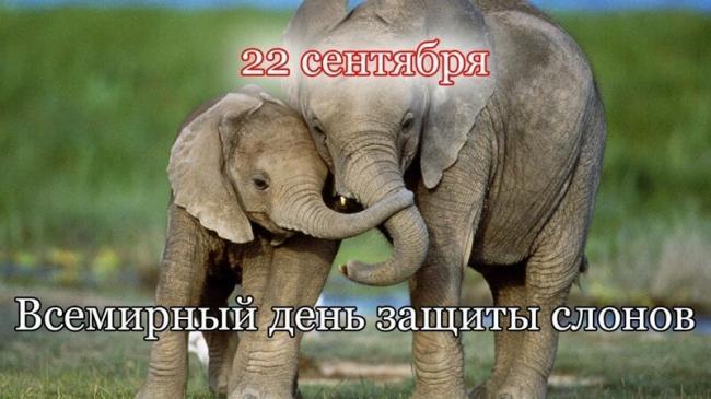 den-zacshiti-slonov.jpg