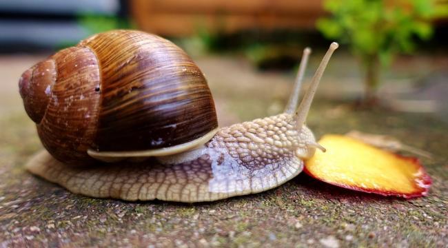 snail-3464926_960_720.jpg