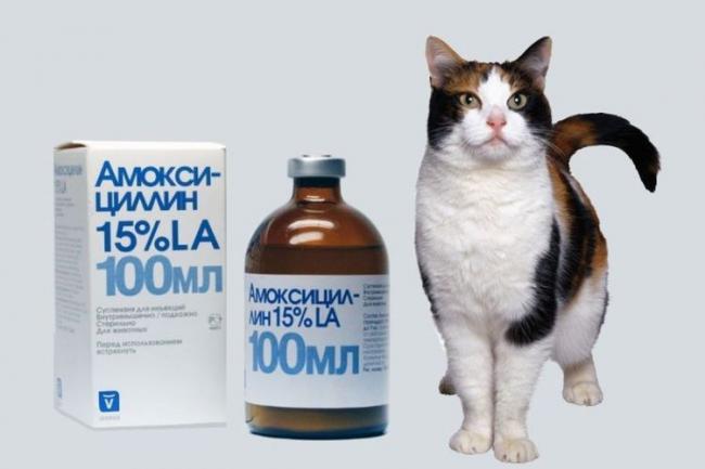 amoksicillin-dlya-koshek.jpg