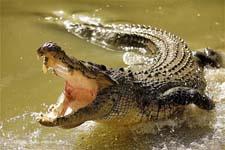 o_krokodile_detyam.jpg