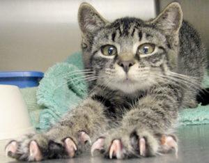 cat-claws3-300x234.jpg