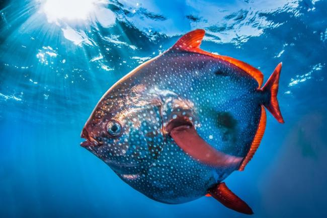 Исключение из правил: оказывается, существуют теплокровные виды рыб