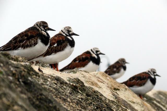 arkticheskie-pticy.jpg