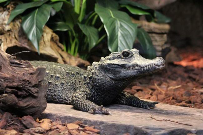 tuporylye-krokodily-sovremenniki-dinozavrov-animal-reader.-ru--1024x683.jpg