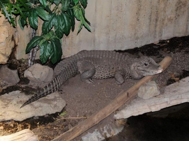 tuporylye-krokodily-sovremenniki-dinozavrov-animal-reader.-ru-002-1024x768.jpg