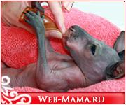 baby-kangaroo_35093869.jpg
