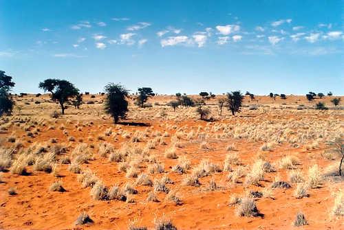 pustyni-afriki-kalahari.jpg