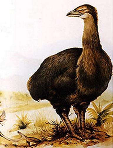 jepiornis-ili-ptica-slon-animalreader.ru-001.jpg