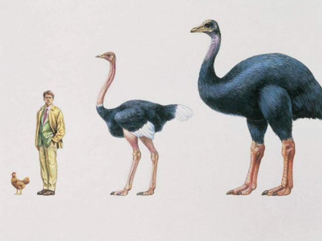 jepiornis-ili-ptica-slon-animalreader.ru_.jpg