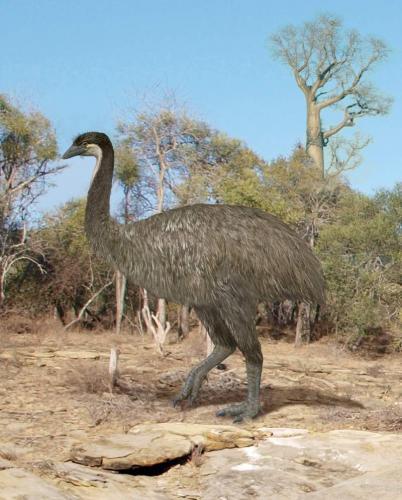 jepiornis-ili-ptica-slon-animalreader.ru-002.jpg