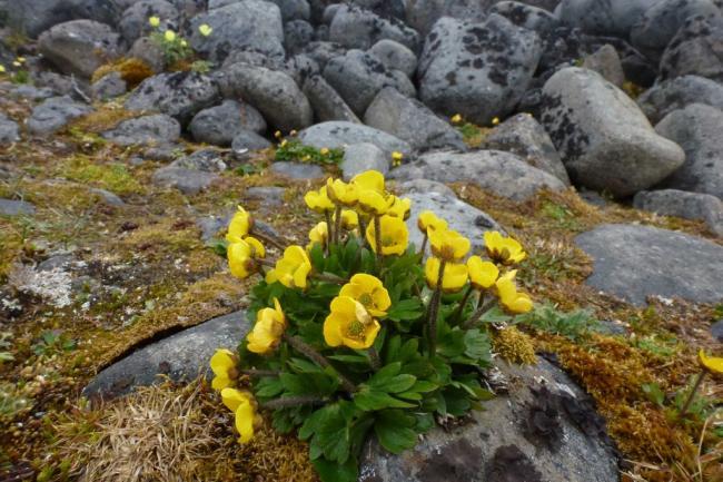 plant-1024x683.jpg