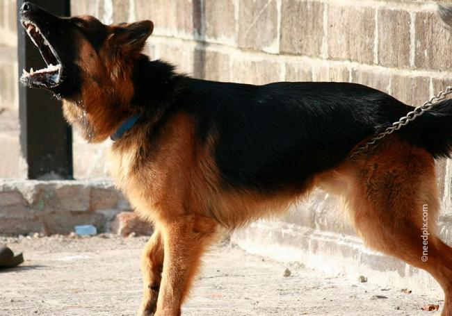 dogs_bark5.jpg