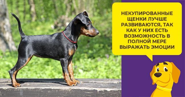 Kartinka-3.-Mnenie-veterinarov.jpg