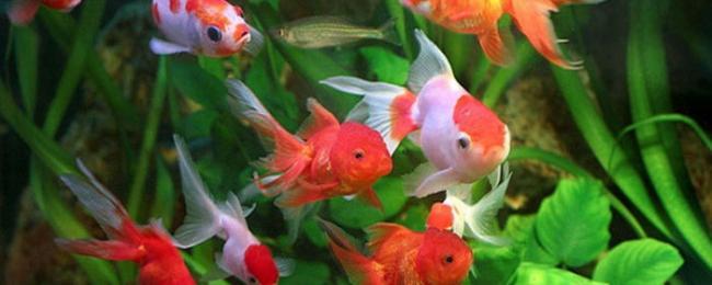 akvariumnye_rybki-700x340-700x280.jpg