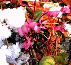 цветок-1.png