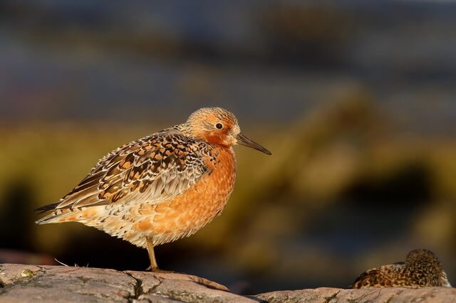 pticy-arktiki.jpg