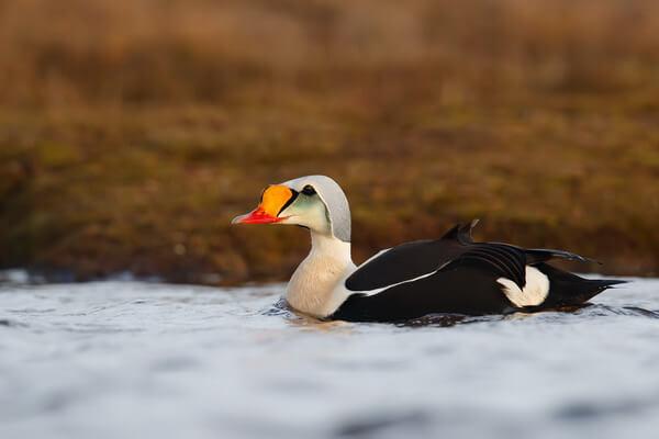 pticy-arktiki-01.jpg