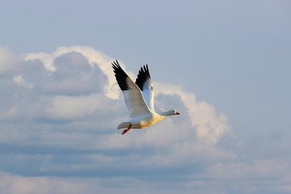 pticy-arktiki-03.jpg