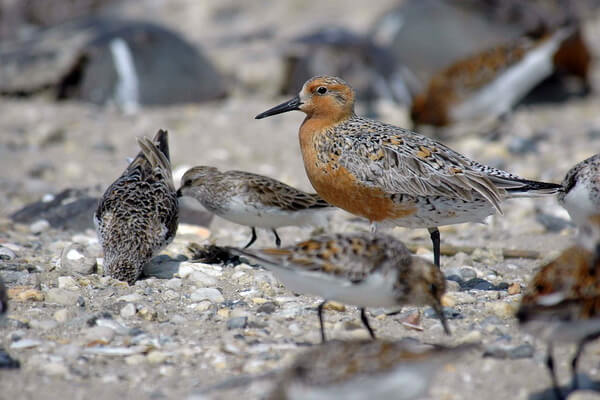 pticy-arktiki-06.jpg