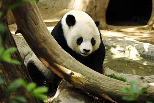 Lightmatter_panda.jpg