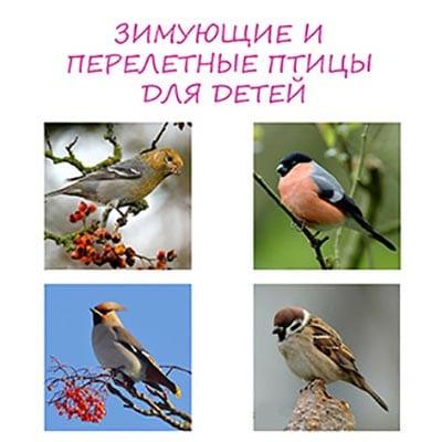 zimuyushhie-ptitsyi.jpg