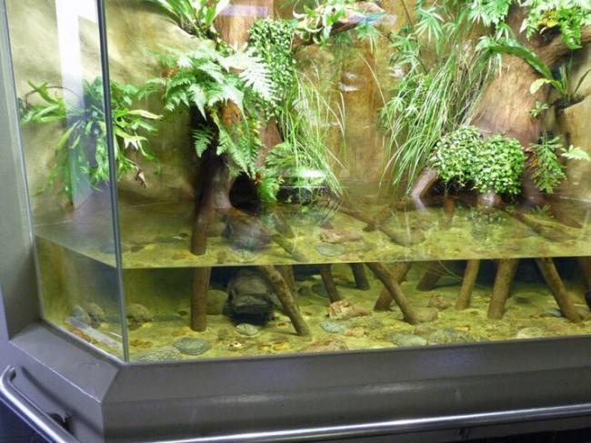 akvariumnye-lyagushki-opisanie-i-vidy-soderzhanie-i-uhod-16.jpg